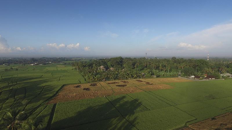 Kaba Kaba Estate 231 188118850354 Tropical Landscape