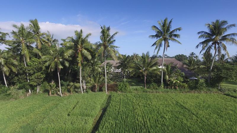 Kaba Kaba Estate 231 769018693353 Lush Landscape
