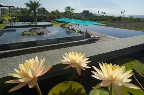 Sanur Residence 233 485250951235 Lily Pond